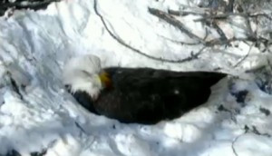 EagleCam3