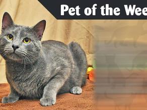 Pet of the Week: Balto