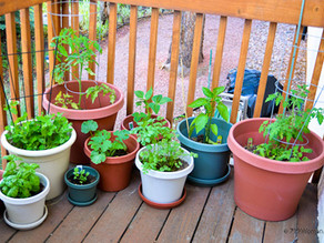 Country Gardens: Vegetables in pots