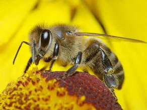 Pollinators at home