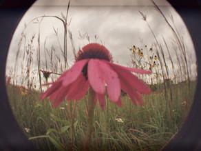 Photo Gallery: September Photo Album