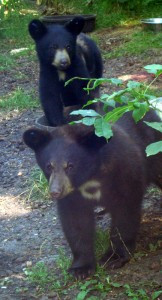 WildandFree-Cubs
