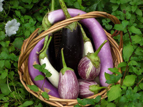 Best ways to grow and eat eggplant