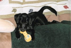 Joey as a puppy. Contributed photo