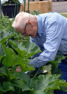 Phil Stavos, age 94, can often be found working in the gardens at Good Shepherd.  Contributed Photo