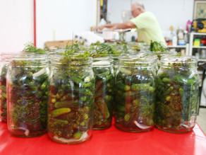 Photo Gallery: Pickles!