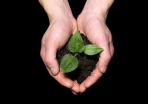 hands-holding-sapling-in-soil
