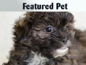 Featured Pet: Cody