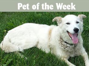 Pet of the week: Sandy