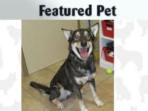 Featured Pet: Timber