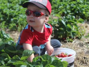 Experience sweet family farming