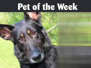 Pet of the Week: Betty