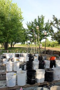 Like most gardens, this garden has rows... just rows of buckets. Photo by Nancy Leasman