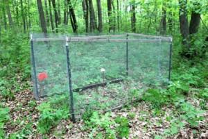 Deer-exclosure-with-electronic-probe-inside-and-orange-flags-marking-deer-scat-behind