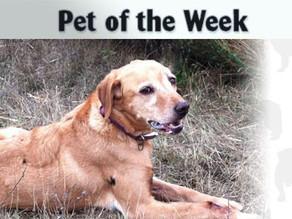 Pet of the Week: Bernie