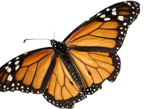 Country Garden: Save the monarchs