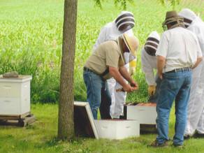 Photo Gallery: Beekeepers