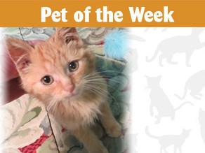 Pet of the Week: