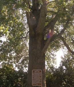 "Porter was once called ""Lone Tree"" because of a landmark cottonwood tree. Photos by Scott Thoma"