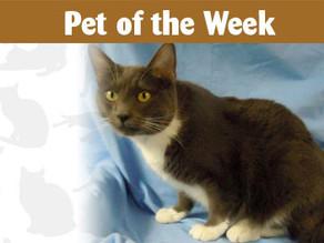 Pet of the Week: Amos