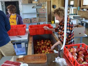 Sunny cleans some freshly picked apples in the harvest house. Photo by Eric Posz