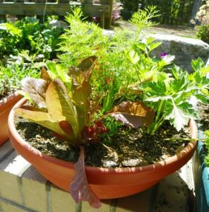 salad-bowl-garden