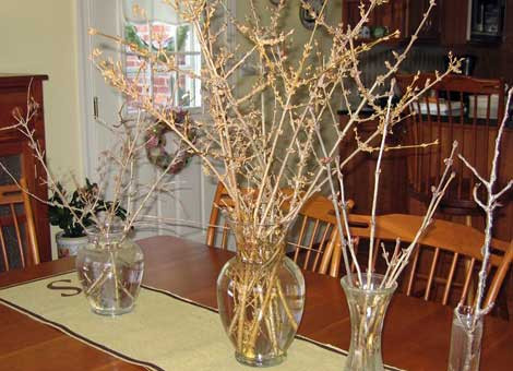 forcing-branches-indoors