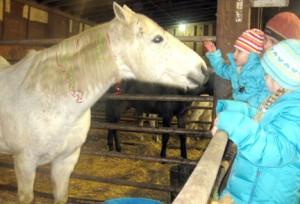 Horse2310
