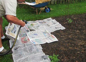 newspapermulch