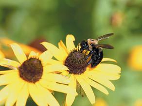 In Your Garden: Have you inadvertently killed bees?