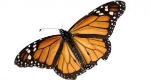 Cutout-butterfly