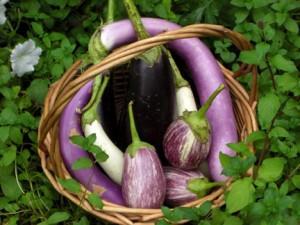 eggplant-in-basket