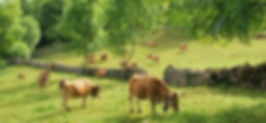 Resultado búsqueda Google: Carne ecológica