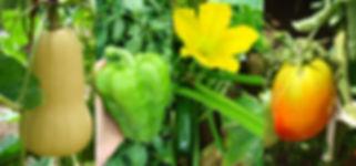 Hortalizas y Verduras Ecológicas del campo a la mesa