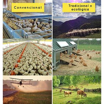 Carne convencional vs. Carne ecológica