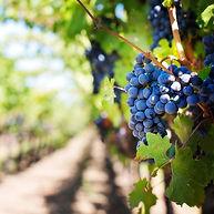 wine list_edited.jpg