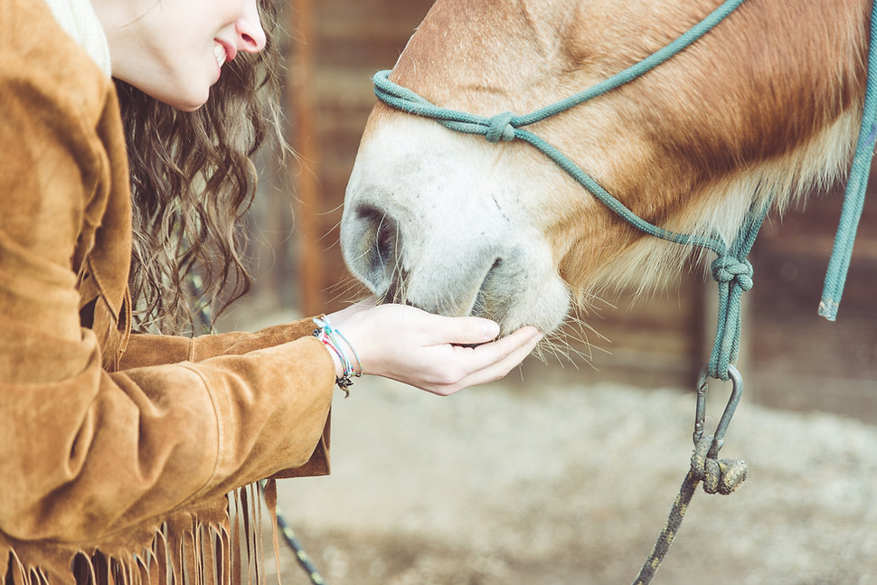 Woman Petting Her Horse. Close Up On Han