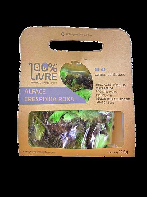 Alface Crespinha Roxa