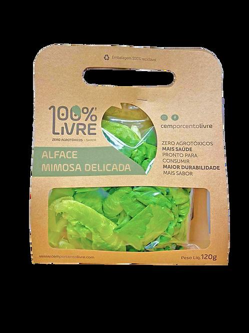 Alface Mimosa Delicada