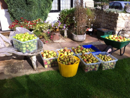 'Apples and Other Fruit'