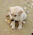 Store namesake,Clipper, as a puppy.