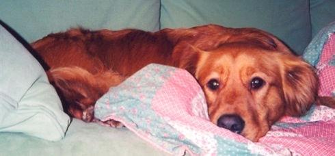 Doodad laying on sofa