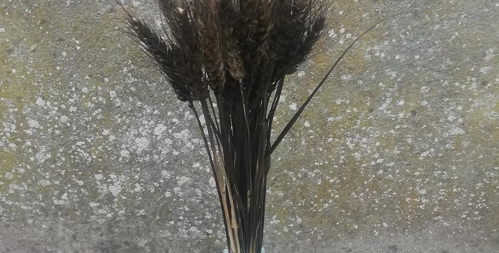 Blé barbus noir