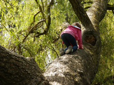 Kids can't climb trees any more