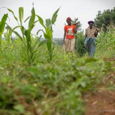 African Farmers.jpg