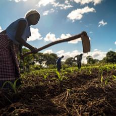 Ghanaian Small Scale Farmer.jpg