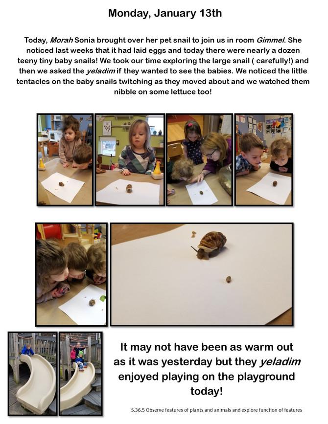 Room Gimmel Observes Snail Life