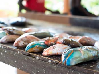 Jamaican Food Stories: How I buy fish in Jamaica