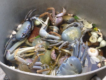 Jamaican Food Stories: Hunting land crabs in Jamaica