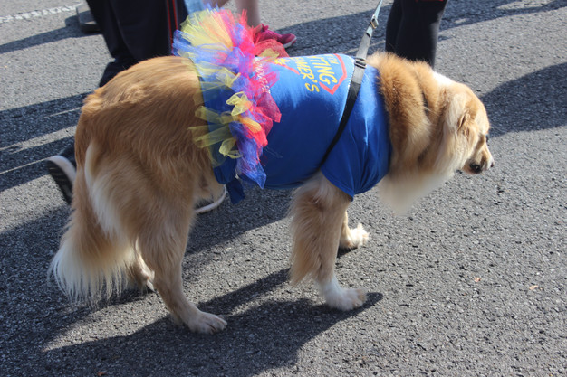 Even the dogs participated!